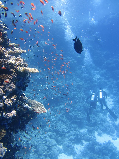 divers-123286_640